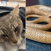 Gato protege crianças do ataque de cobra venenosa e comove as redes sociais