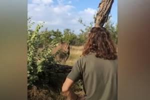 Homem escapa de ataque brutal de rinoceronte apenas usando a voz; assista