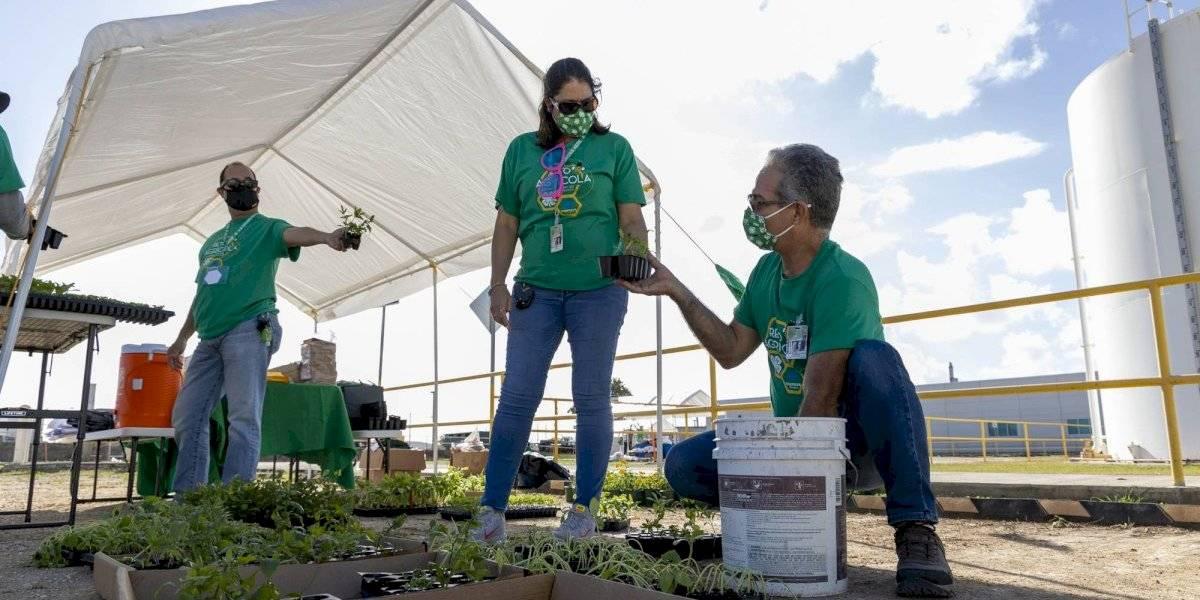 Cientos de jóvenes boricuas completan primera fase de reto agrícola