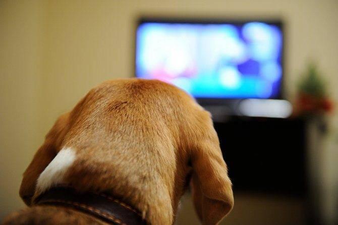Perro TV