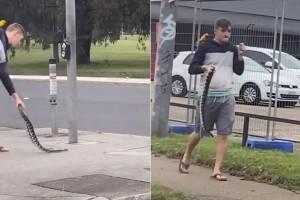 Vídeo mostra homem fazendo caminhada com cobra e pássaro no ombro