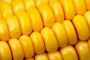 https://www.publimetro.com.mx/mx/opinion/2021/03/04/la-apuesta-maiz-amarillo-coca-cola-e-ingredion.html