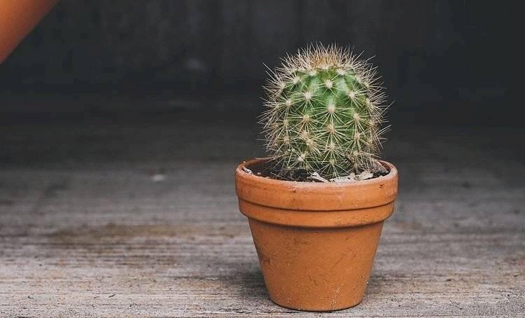 cactus-e7745ff016043770ffd58c5b40774dcf.jpg