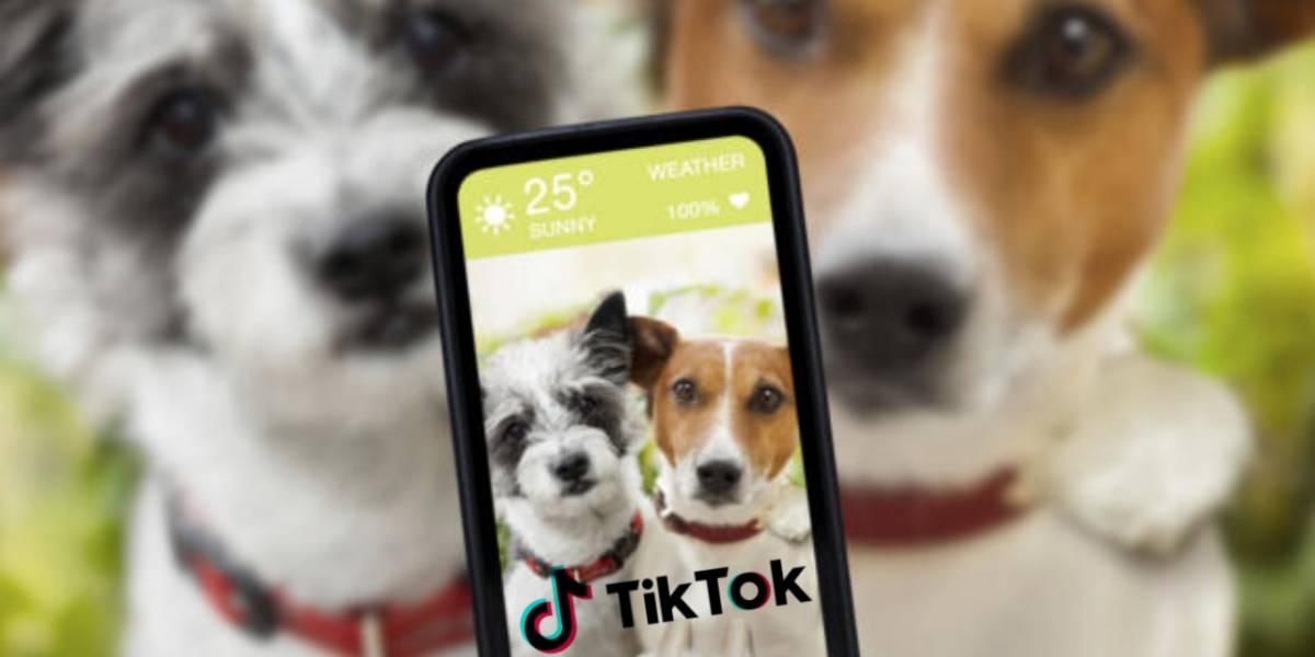 Las peligrosas tendencias de TikTok que pone en riesgo a las mascotas