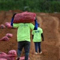 El dilema agrícola y la carrera por cosechar soluciones