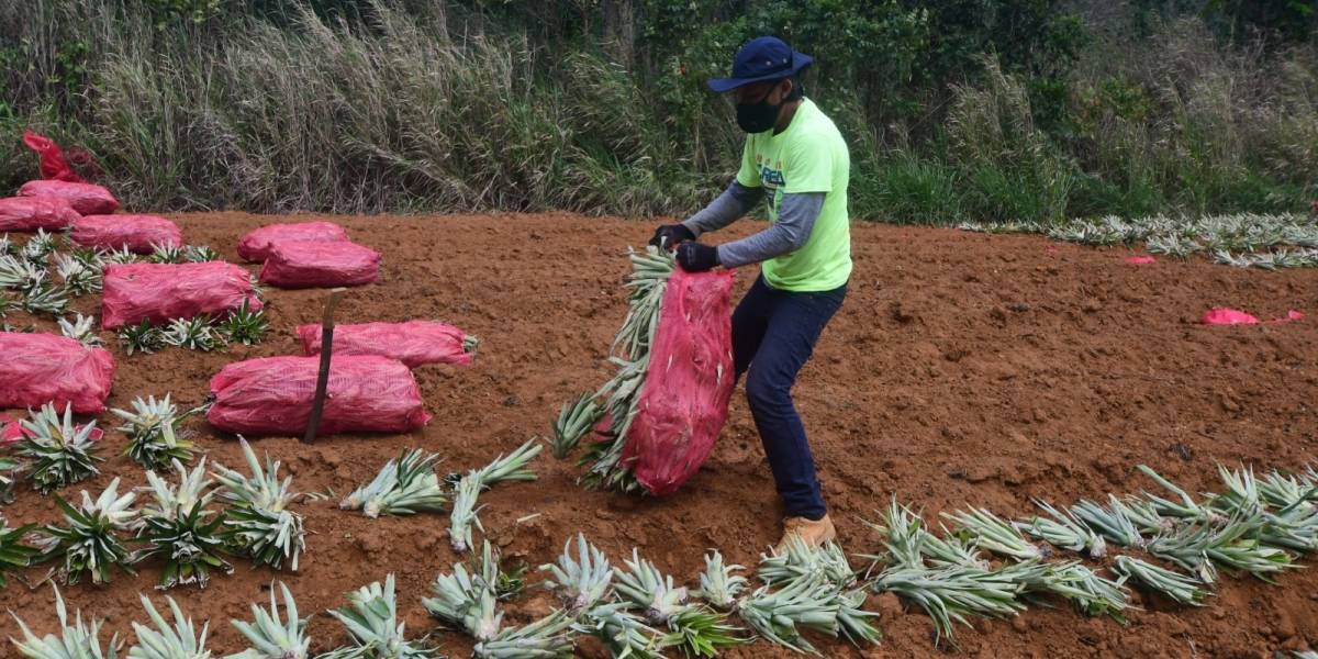 Hogar Crea promueve el trabajo en las fincas agrícolas