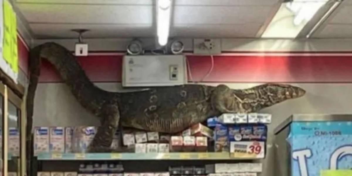Lagarto gigante ingresa a supermercado y genera pánico entre los clientes