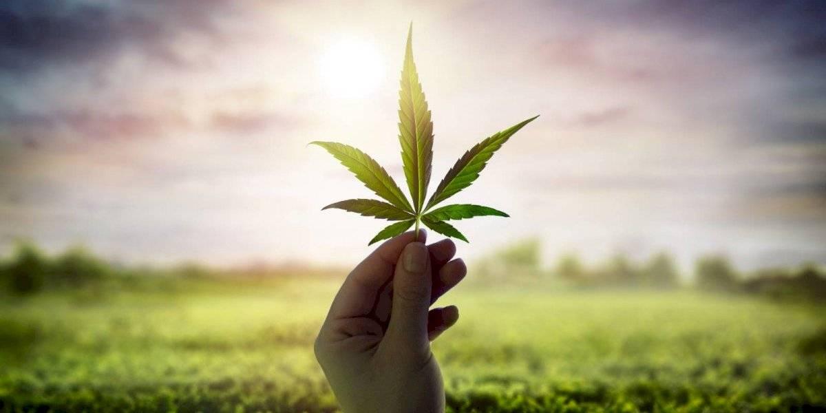 Cannabis medicinal: Una industria que crece de forma errática