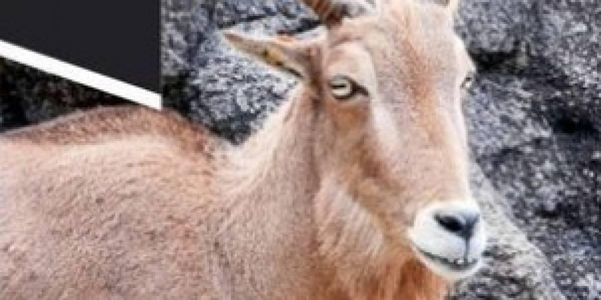 Se escapa un animal del zoológico de Mayagüez