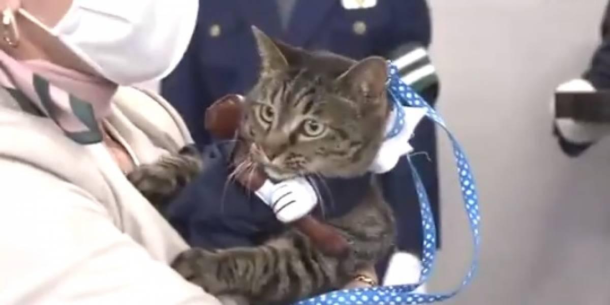 La historia de Koko: el gato héroe que se convirtió en jefe de policía en Japón