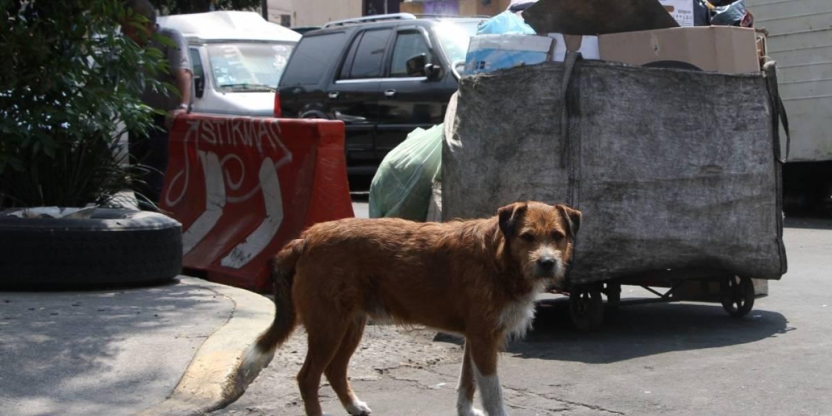 Veterinaria chilena pone vacunas para perros a decenas de personas