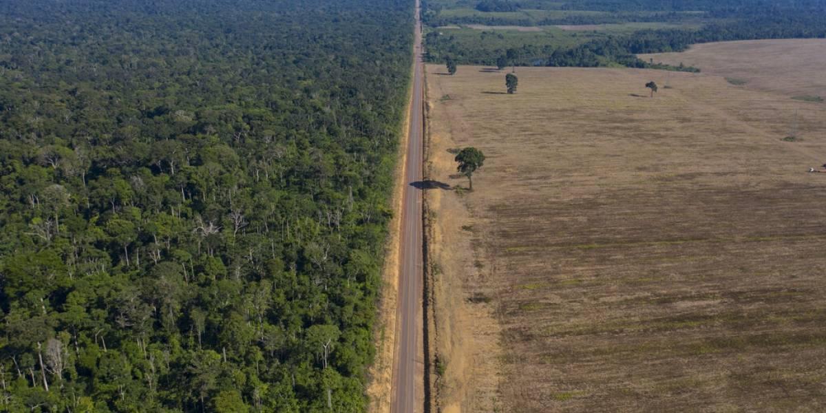 Reportan dramático aumento en deforestación de la Amazonía brasileña