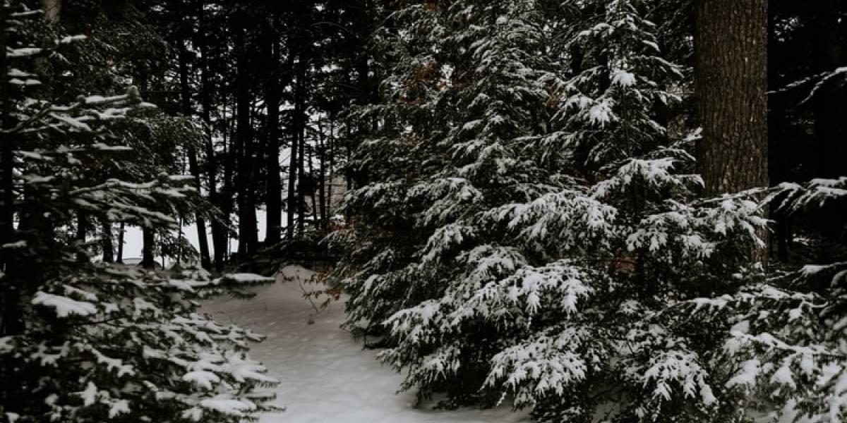 Mira cómo hacer el efecto Narnia en TikTok