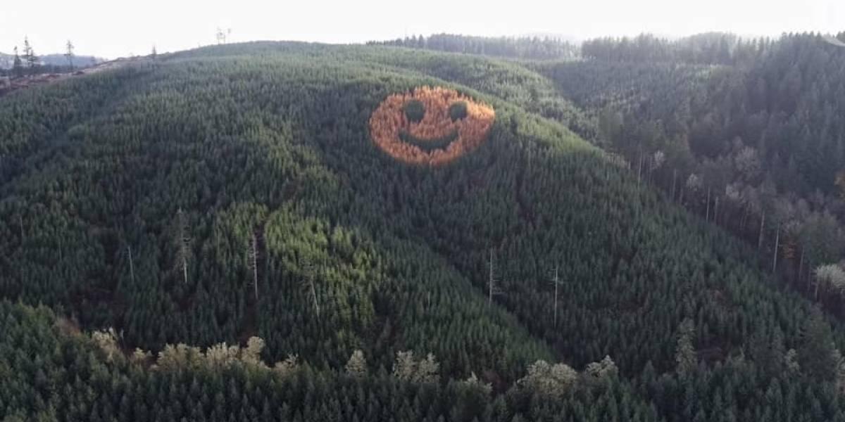 ¿Cómo surgió el emoji más grande y natural del mundo?