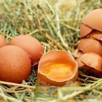 Dale un impulso y más vida a las plantas con las cáscaras de huevos