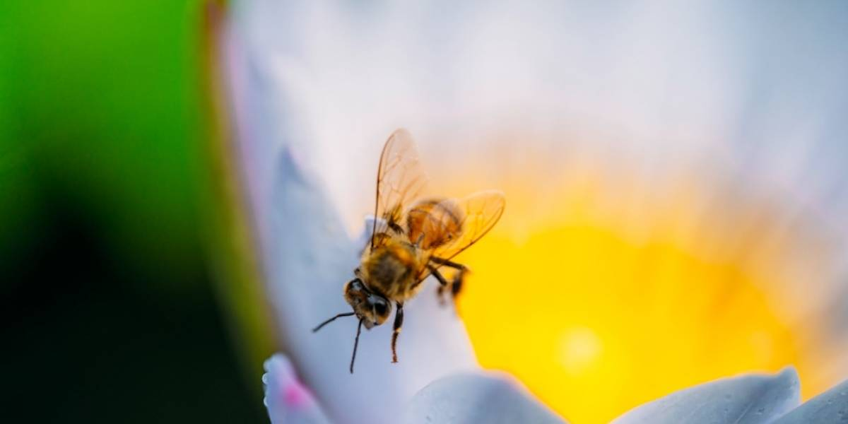 Día Mundial de las abejas: Inauguran santuario en Manatí
