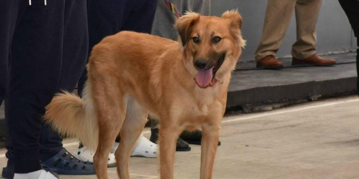 Ponen en marcha proyecto de perros detectores de COVID-19