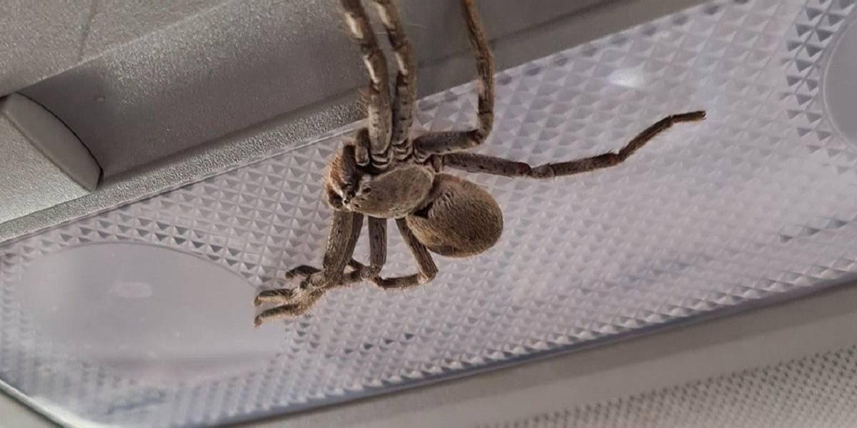 Sorprendente reacción de conductora tras encontrar enorme araña en su auto mientras viajaba a 100 km/h