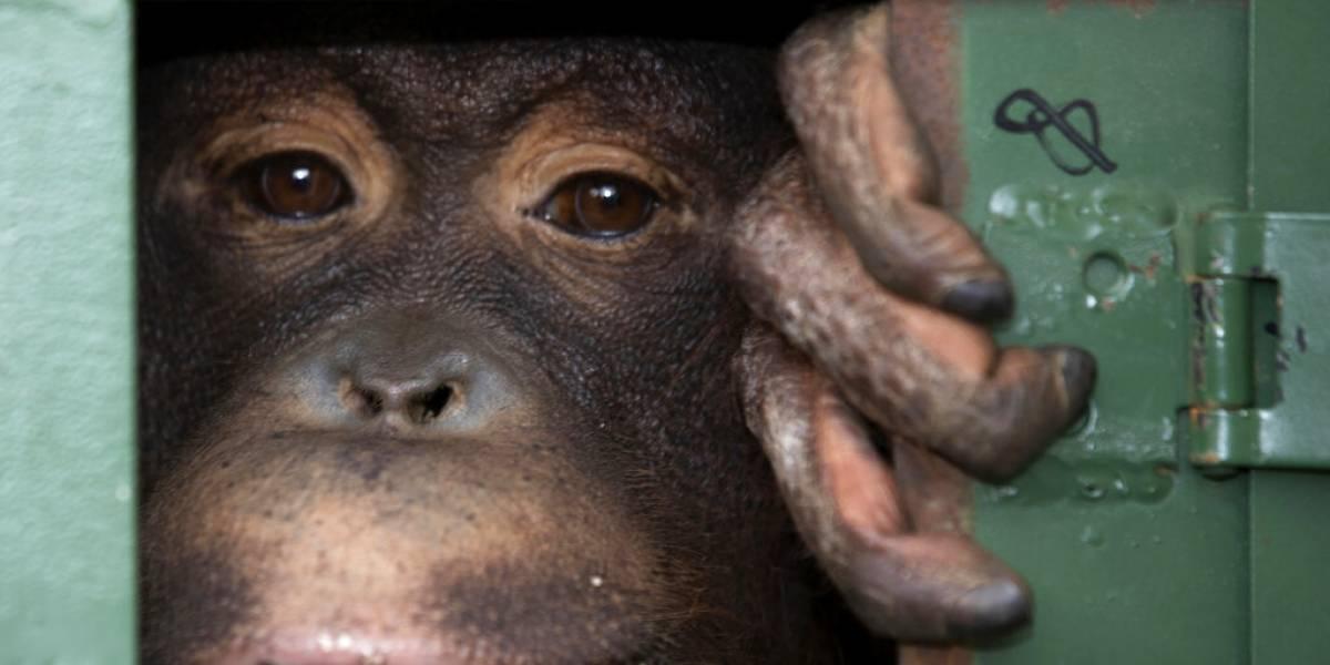 Tailandia frenará comercio de animales para evitar pandemias