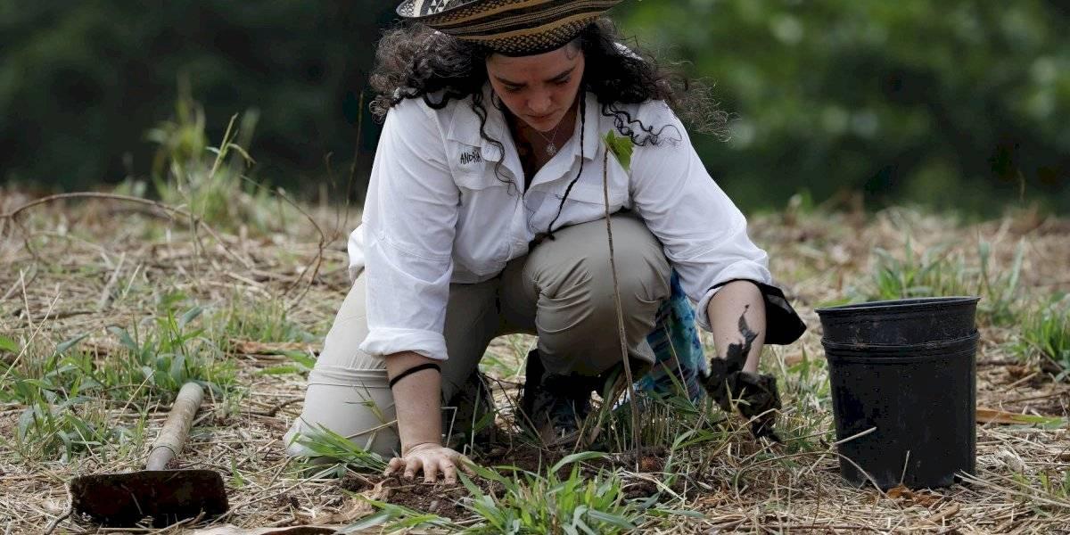 Siembran 5 mil árboles nativos y endémicos en un solo día