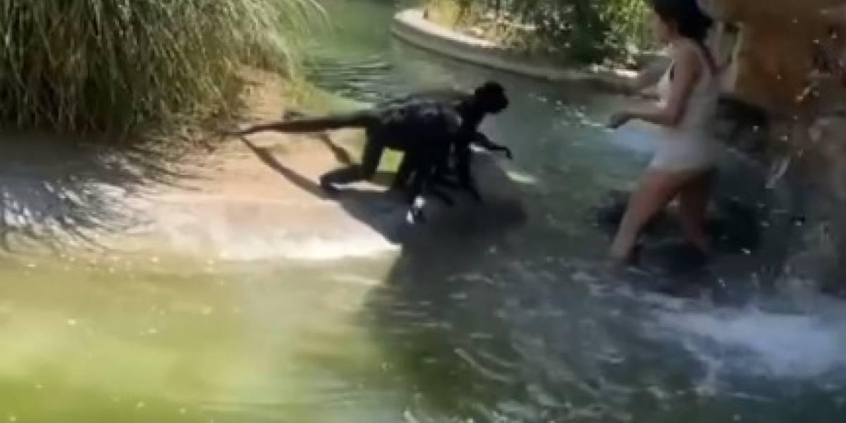 Mujer entra a zona de los monos en zoológico para darles de comer Cheetos