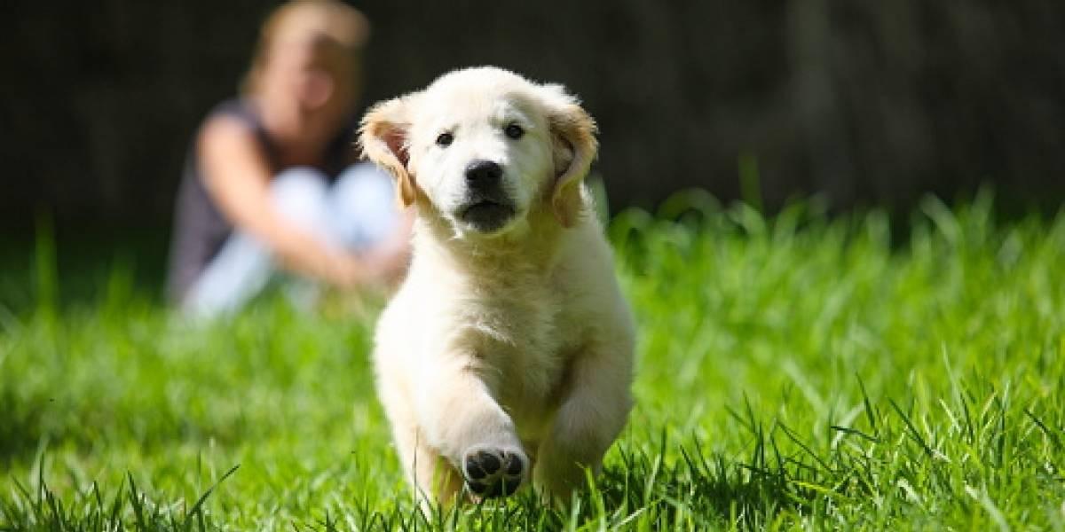 Rusia comienza a vacunar a mascotas contra COVID-19