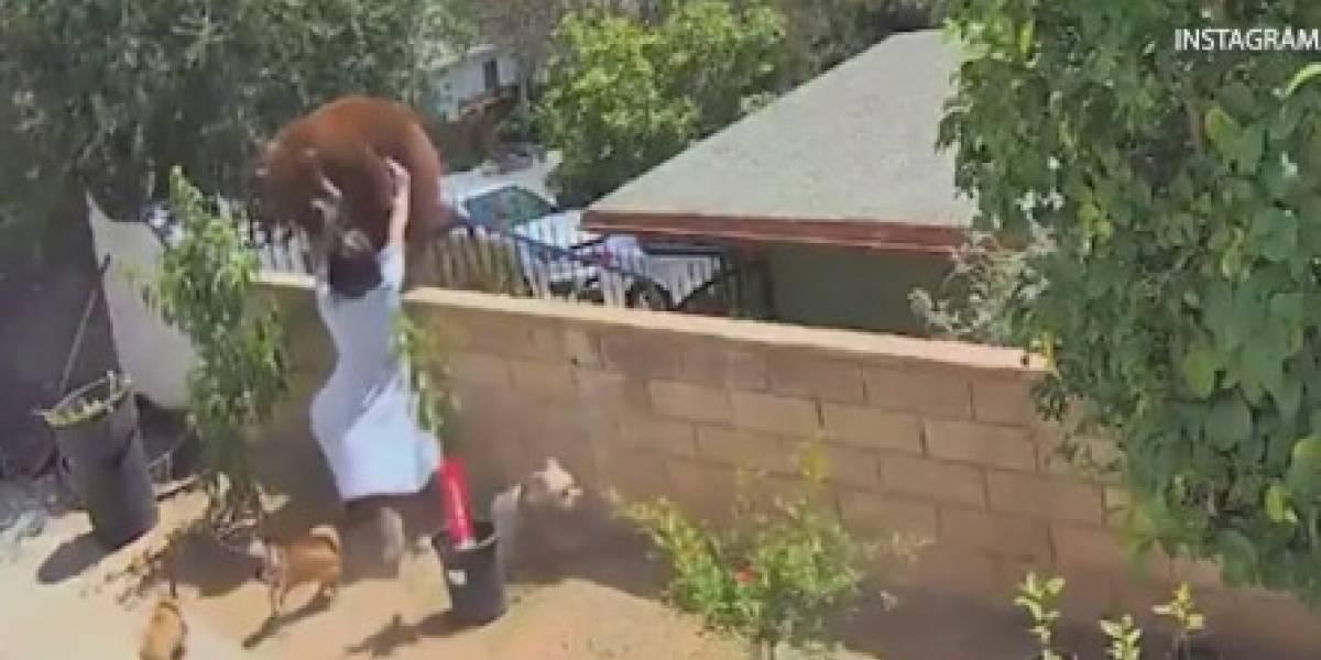 Joven de 17 años pelea con un oso para salvar a sus perros en California