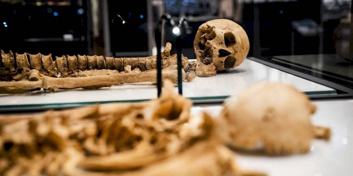 Esqueletos de era de los vikingos se reunirán en exposición