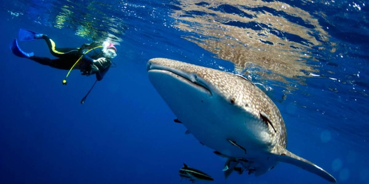 """""""Voy a morir"""": El increíble relato de un buzo que quedó atrapado en la boca de una ballena"""