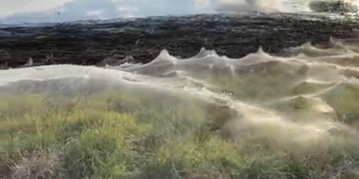 Enorme telaraña cubre zona de Australia