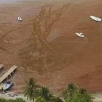 Alquilarán embarcación especializada para remover sargazo de Las Croabas