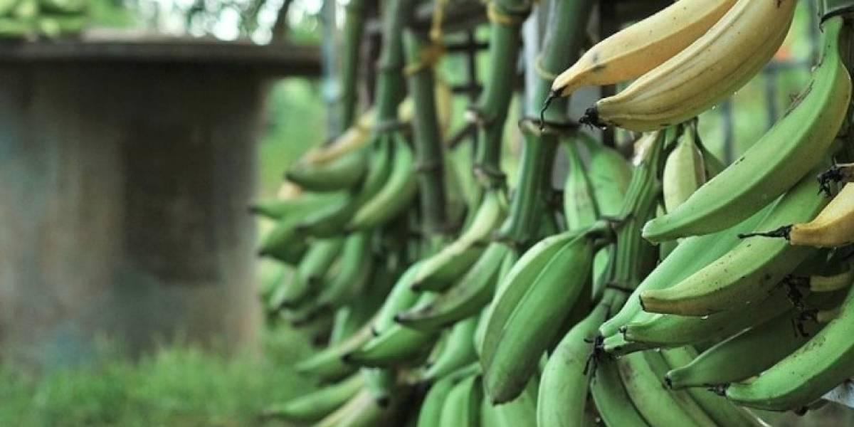 Secretario de Agricultura pide a los supermercados vender los plátanos a menor precio
