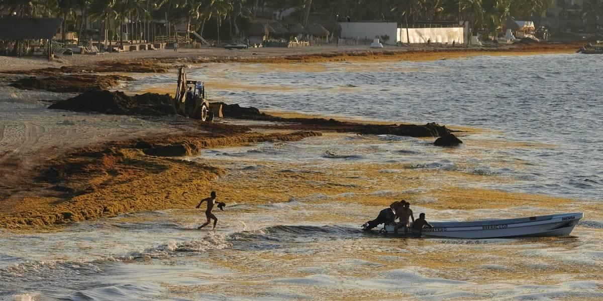 Costa caribeña de México también sufre azote del sargazo
