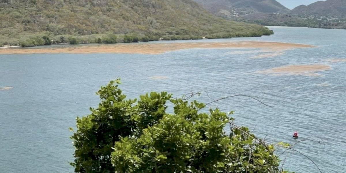 Remueven 1,300 libras de sargazo en bahía de Guánica