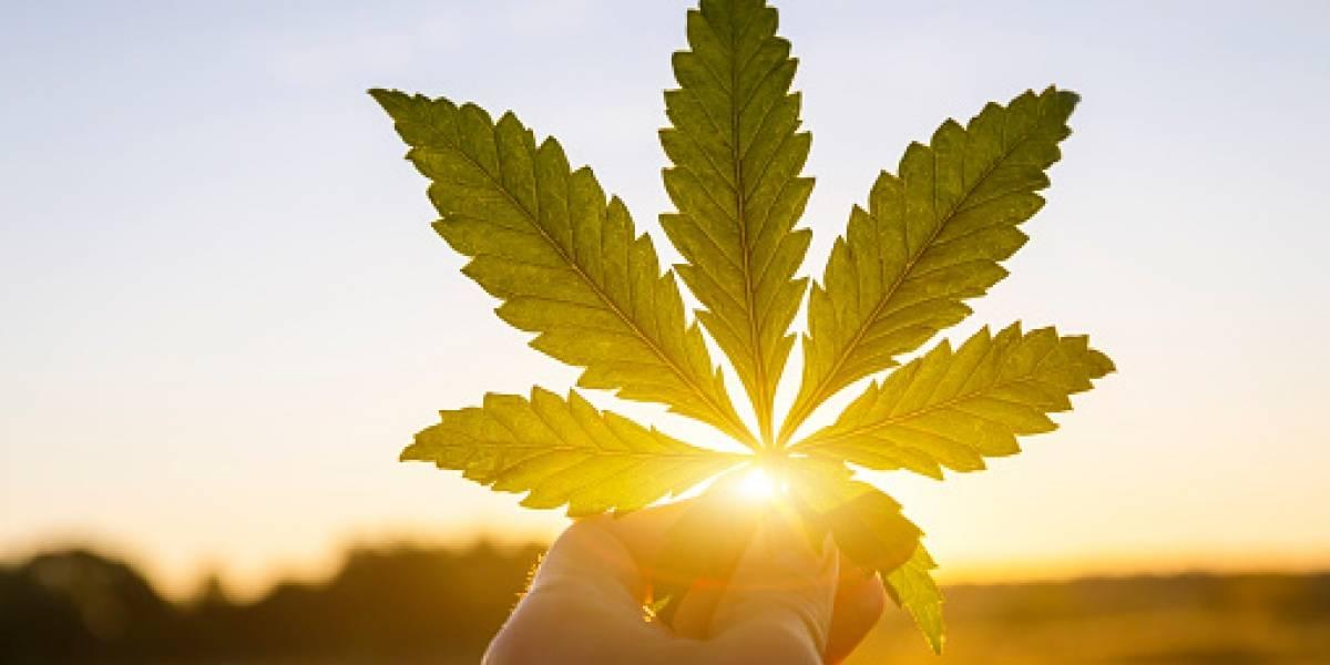 Consumo lúdico de la marihuana ya no es prohibido en México