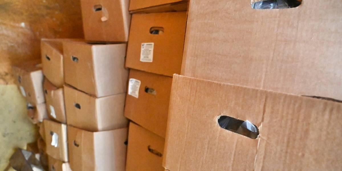 Agricultura detiene vagón con 889 cajas de plátanos