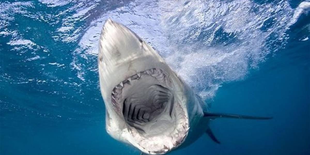 Tiburón saltó del mar para morder un pie a hombre en parapente