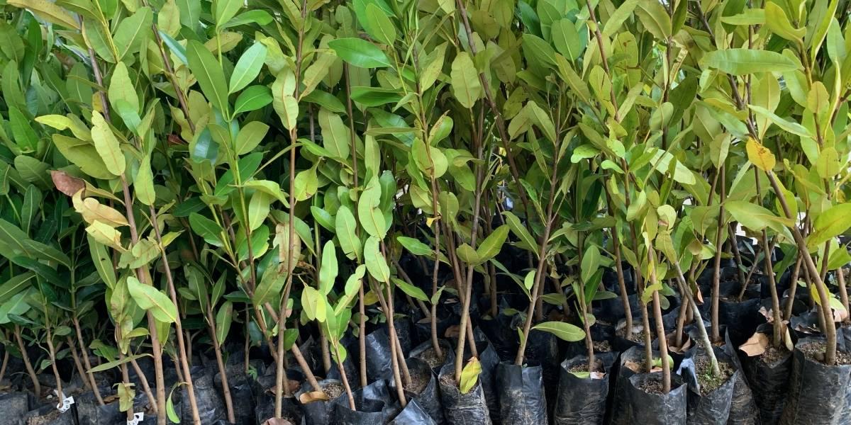Para la Naturaleza reparte más de 17 mil árboles