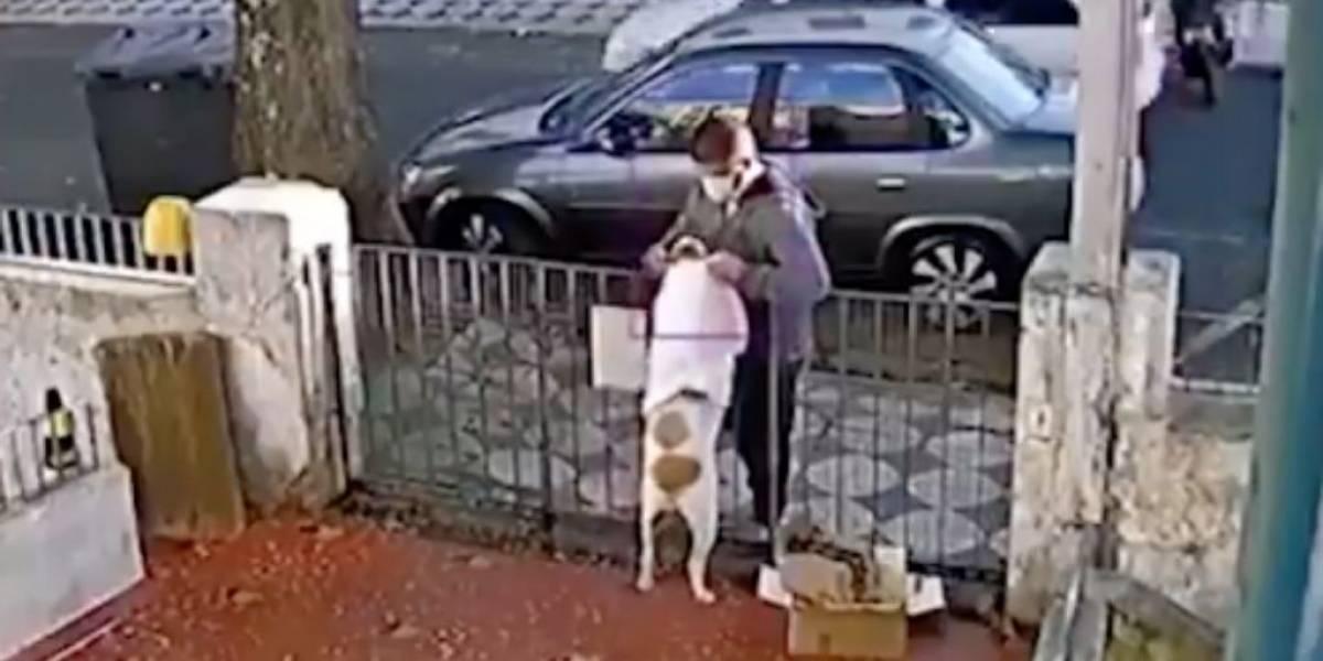 ¡Descarado! Sujeto fue captado robándole la ropa a una perrita