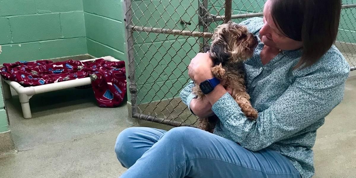 Mujer recupera después de siete años a mascota robada gracias a microchip