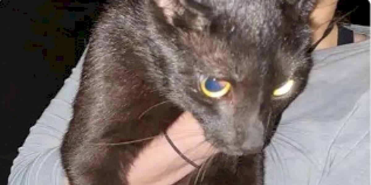 Hallan vivo a gato que estaba en edificio derrumbado en Miami