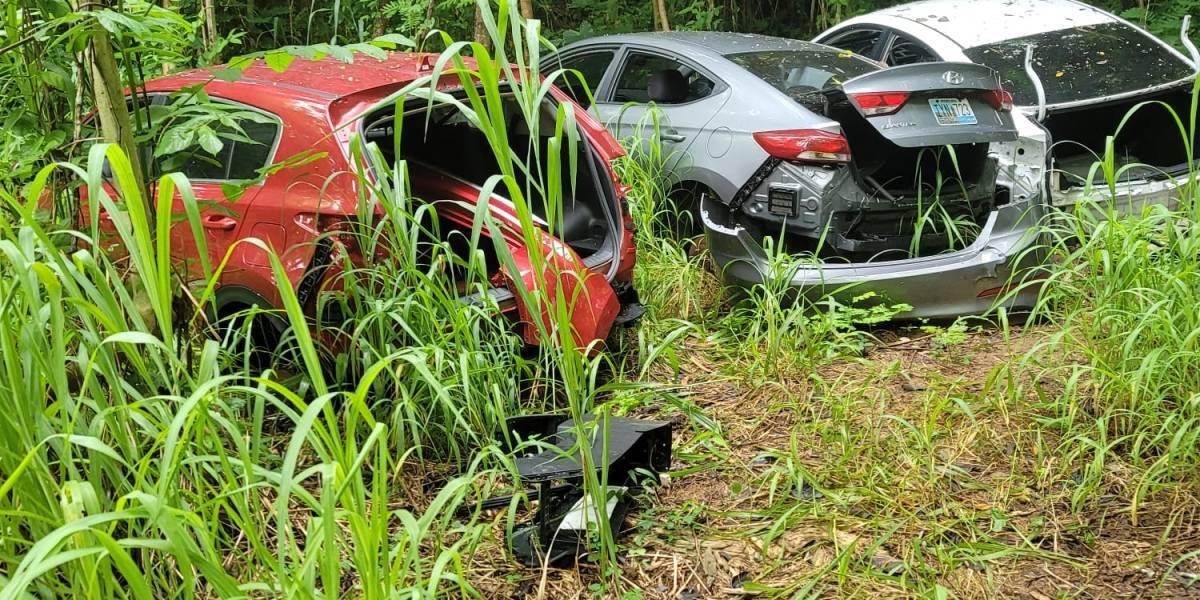 Encuentran múltiples autos robados en terreno de Vega Baja