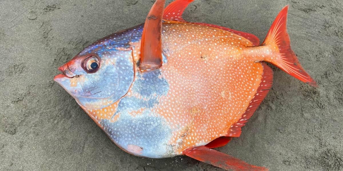 El extraño pez gigante que intriga a los científicos en Estados Unidos