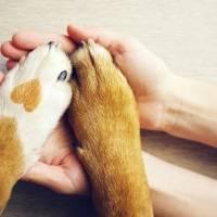 ¿Por qué las patitas de los perros huelen a queso?