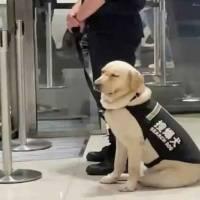 """""""No quería trabajar"""": Perrito de seguridad se hace viral tras dormirse en plena jornada de trabajo"""
