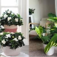 Plantas perfectas para darle un toque elegante a tu hogar
