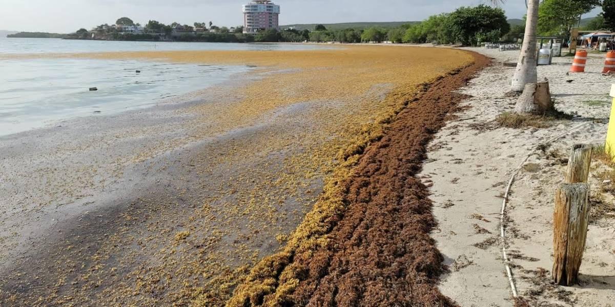 Denuncian Gobierno no atiende situación de sargazo en Playa Santa