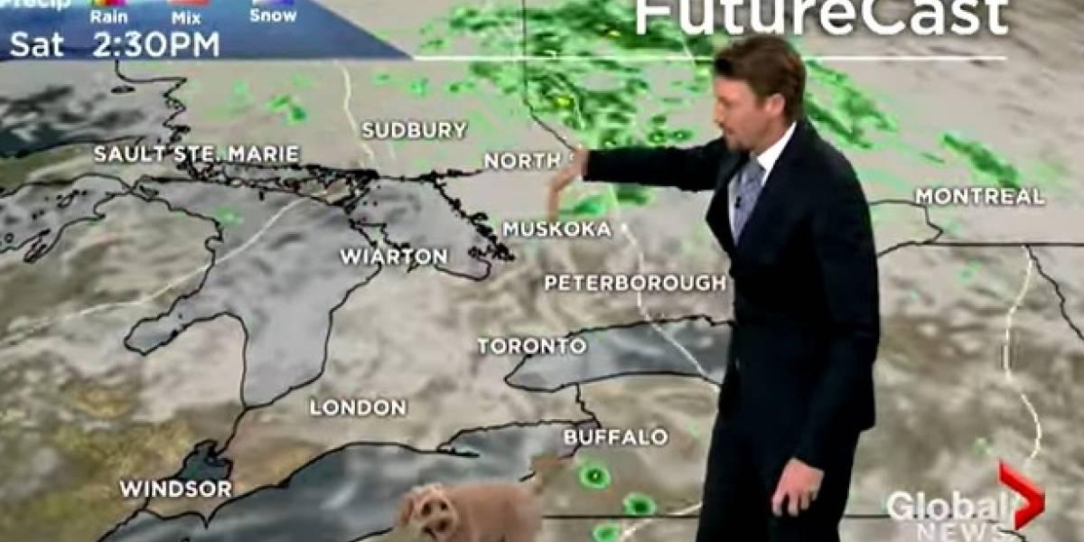 Perrito interrumpe a meteorólogo en plena transmisión en vivo para pedirle comida