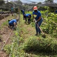 Empleados de PathStone realizan trabajo voluntario en finca de Humacao