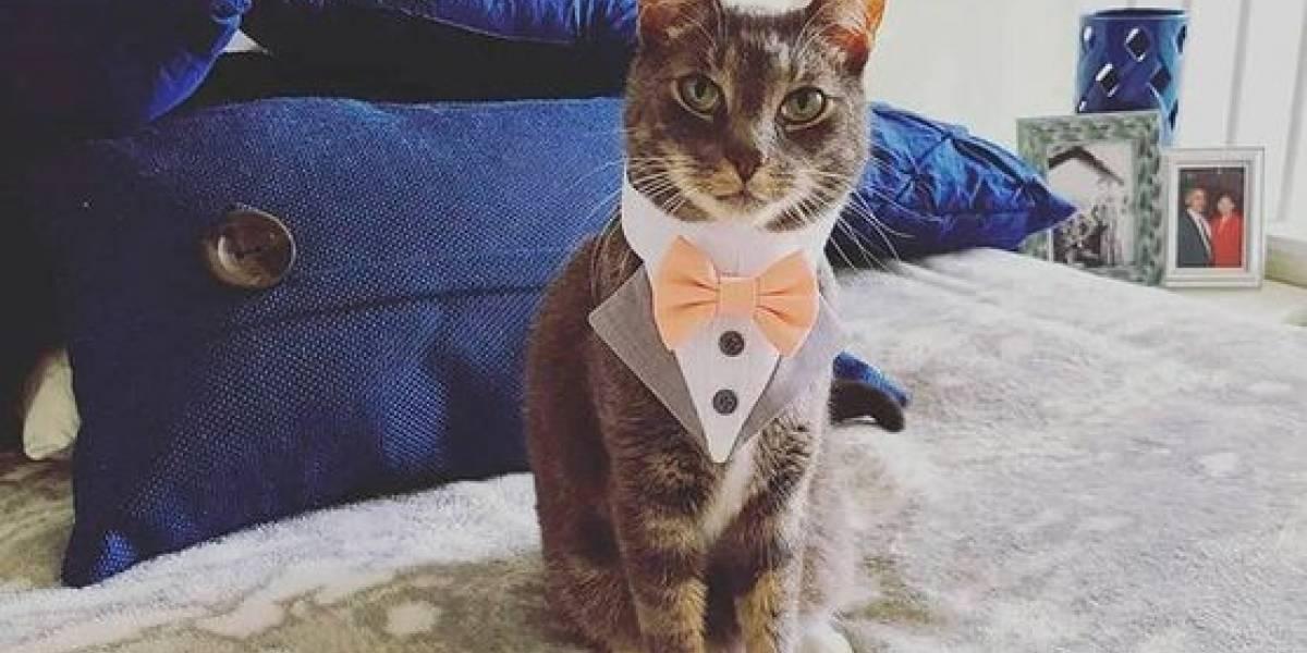 Un gato fue padrino de bodas y su aspecto elegante enloqueció a las redes